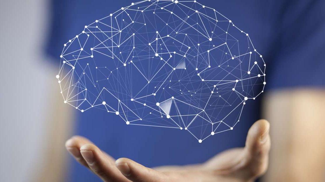 A Neuroscience Primer